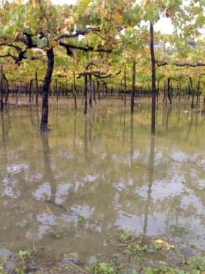 20061108150430-lluviaparralmini.jpg