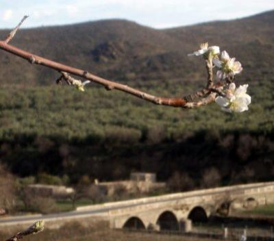 20070110162423-florpuentemini.jpg