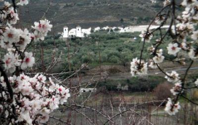 20070221143315-flor-1mini.jpg