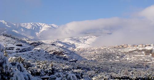 Abla nevada