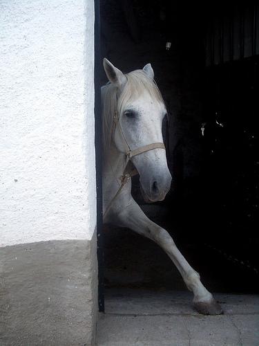foto caballo en Abla